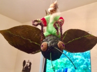 Green rider gnome